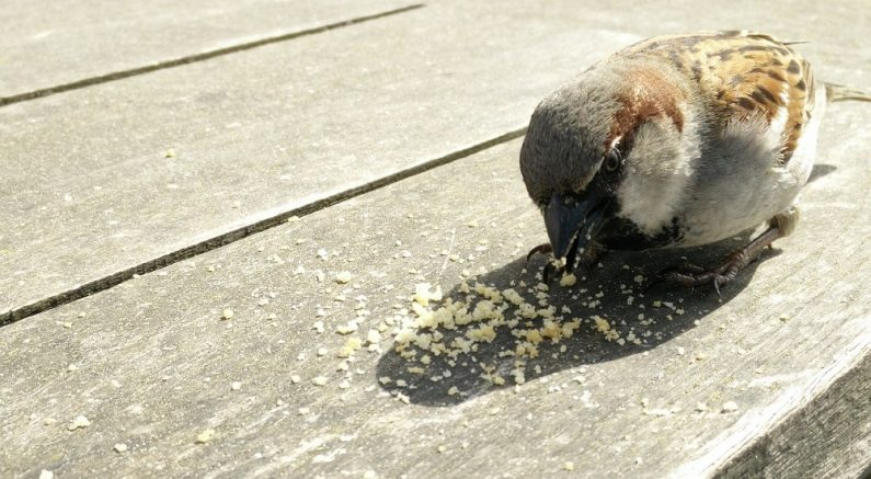 Bird crumbs
